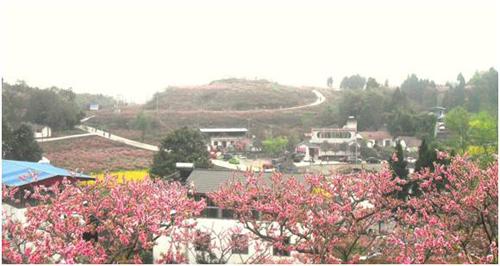 四川省仁寿县方家镇文化兴镇富民 -西部经济网图片